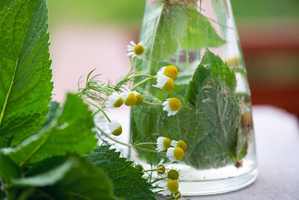 Mięta – co zrobić z tym ziołem? Miętowe inspiracje