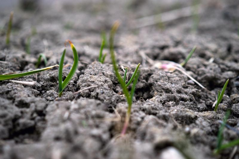 Biointensywne ogrodnictwo? Czyli jak mieć więcej z małej powierzchni
