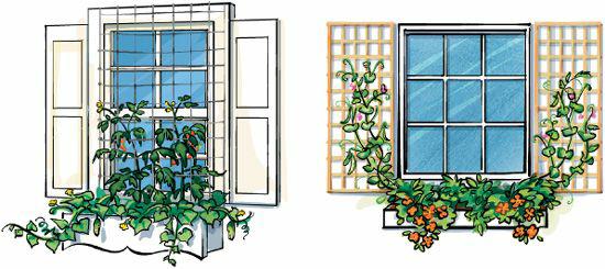 ogrodnictwo wertykalne - okno