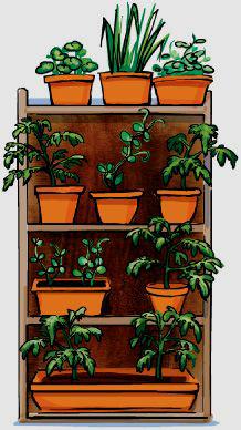 ogród wertykalny półka