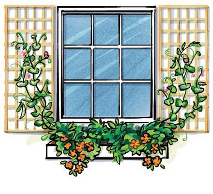 Uprawiamy rośliny na małej powierzchni – ogrodnictwo wertykalne