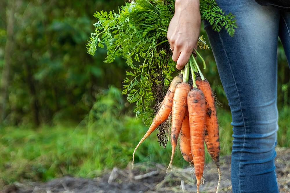 Wzmacniamy odporność warzywami okopowymi